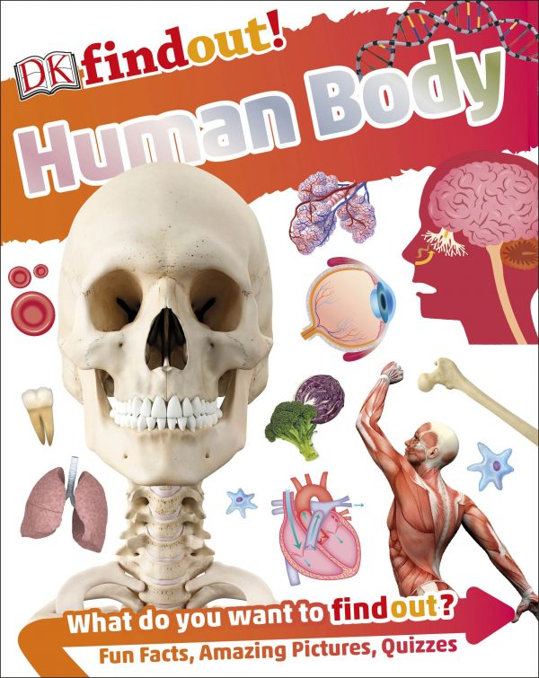 Find Out! Human Body
